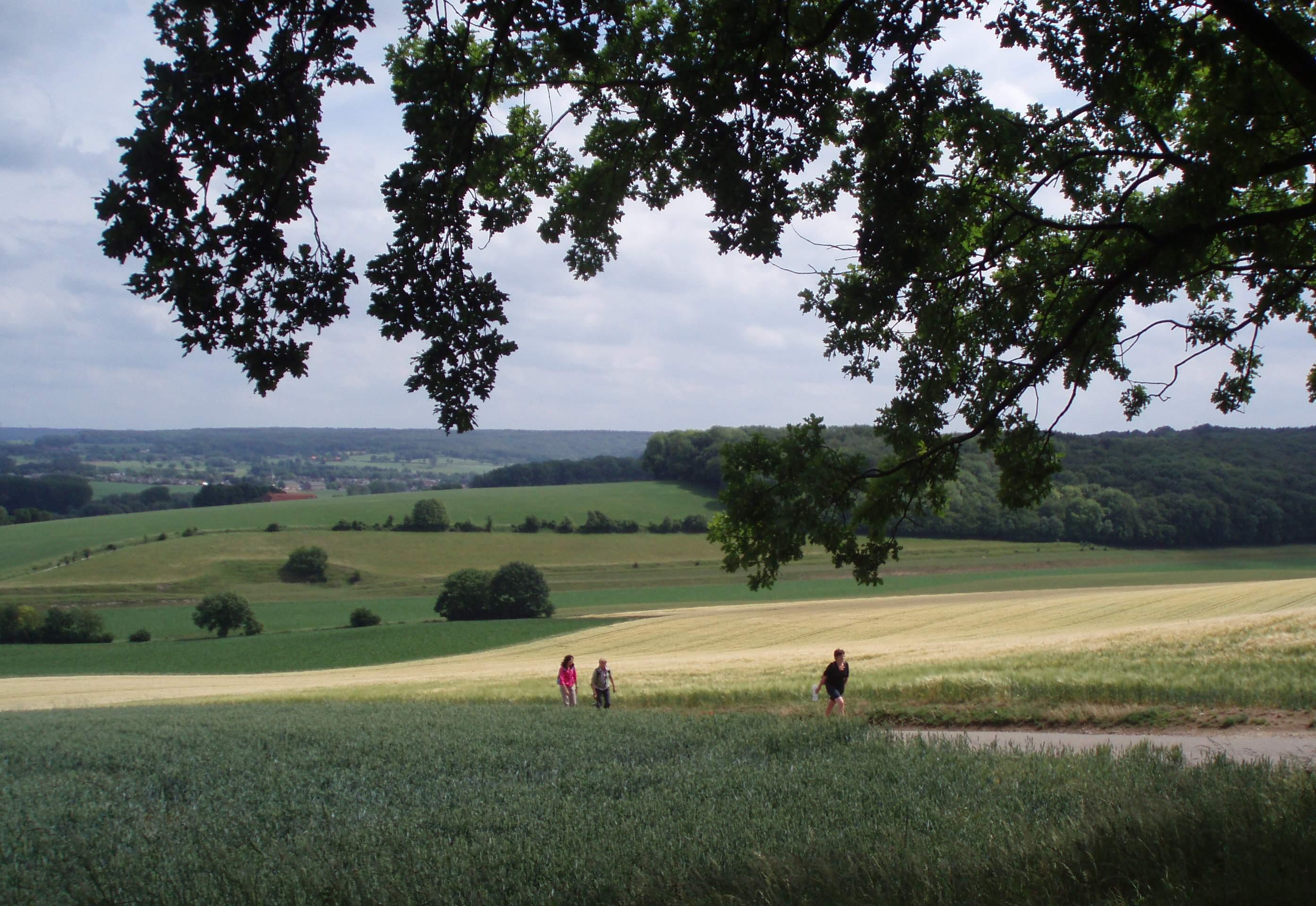 landschap rondom Mechelen